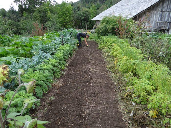 Concimi Per Giardino ed Orto Biologico: Quali Sono i Migliori?