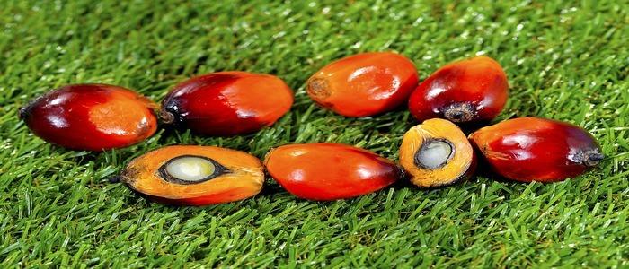olio-di-palma-acidi-grassi